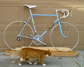 Bluteni with Molteni Cat