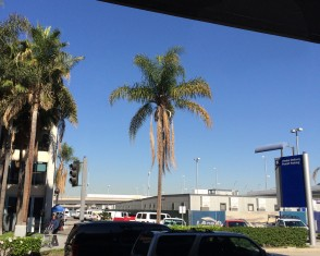 Palm Tree (lax)
